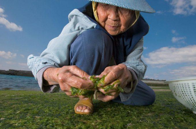 Секреты азиатского долголетия