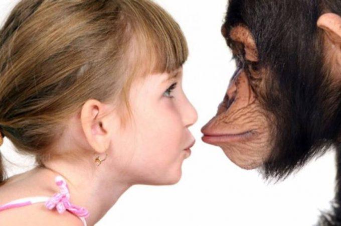 Чем человек отличается от других животных